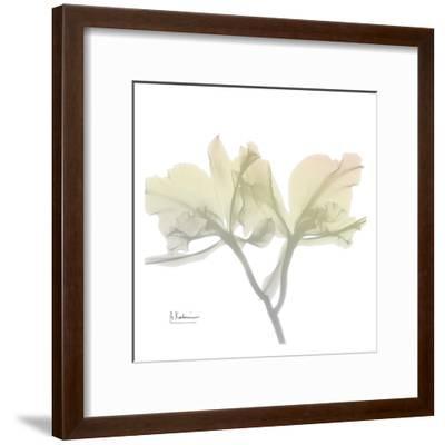 Sunday Morning Orchid-Albert Koetsier-Framed Art Print