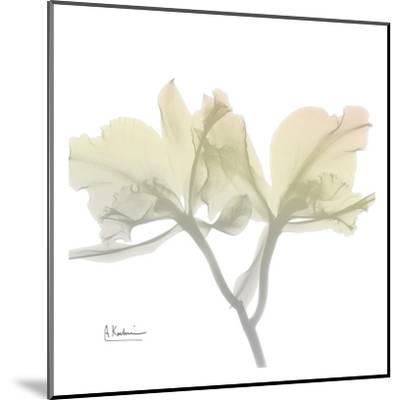 Sunday Morning Orchid-Albert Koetsier-Mounted Art Print