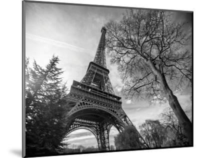 Eiffel Tower With Tree-St?phane Graciet-Mounted Art Print