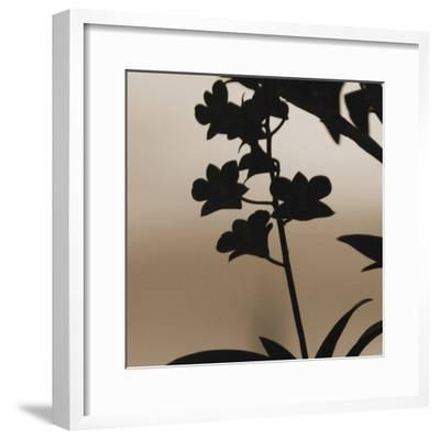 Exotica II-Tony Koukos-Framed Giclee Print