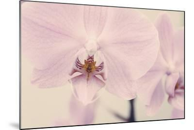Orchid Dream-John Harper-Mounted Giclee Print