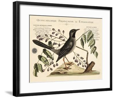 Vintage Bird - Marseilles-Stephanie Monahan-Framed Giclee Print