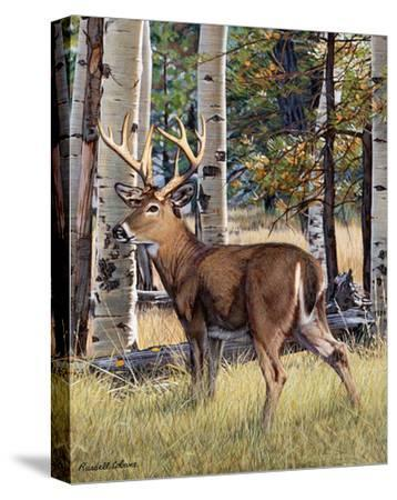Fall Whitetail-Russell Cobane-Stretched Canvas Print
