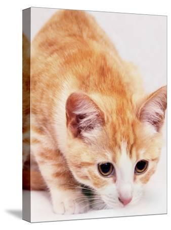 Red Cute Cat Pet Friend-Wonderful Dream-Stretched Canvas Print