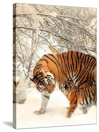 Tiger Family In The Snow-Wonderful Dream-Stretched Canvas Print