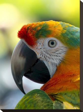 Colorful Bird Parrot Animal Art Print by Wonderful Dream   Art com