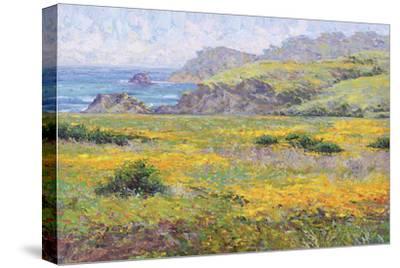 Golden Poppies-Dean Bradshaw-Stretched Canvas Print