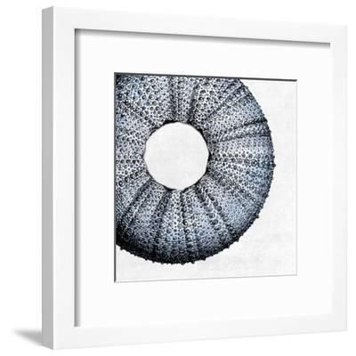 Urchin Shell 1-Sheldon Lewis-Framed Art Print