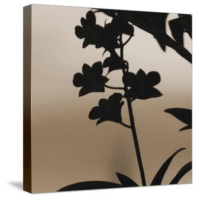 Exotica II-Tony Koukos-Stretched Canvas Print