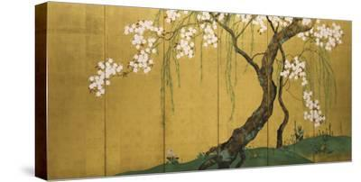 Maples and Cherry Trees-Sakai Hoitsu-Stretched Canvas Print