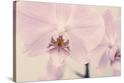 Orchid Dream-John Harper-Stretched Canvas Print