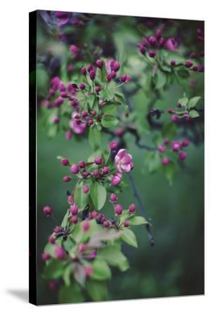 Enchanting Garden Stretched Canvas Print by Irene Suchocki | Art com