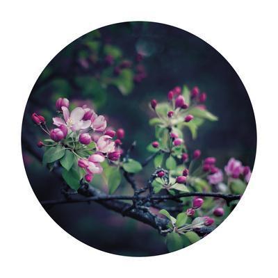 Floral Elegance - Sphere-Irene Suchocki-Framed Giclee Print
