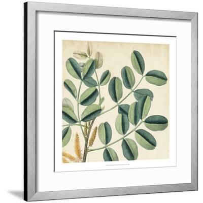 Garden Bounty IX-Vision Studio-Framed Giclee Print