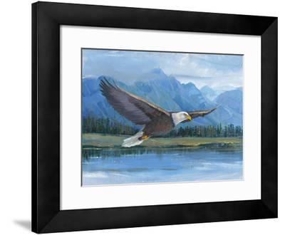 Eagle Soaring-Tim O'toole-Framed Art Print