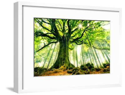 Ponthus' Beech-Christophe Kiciak-Framed Art Print