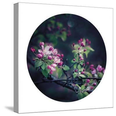 Floral Elegance - Sphere-Irene Suchocki-Stretched Canvas Print