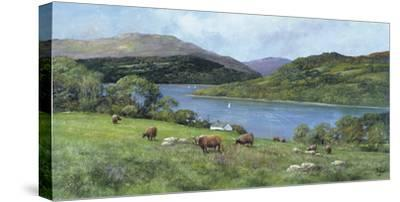 Highland Cattle-Clive Madgwick-Stretched Canvas Print