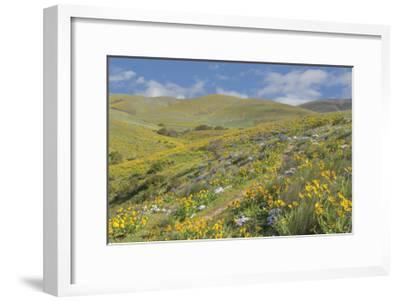 Spring Wildflowers-Don Paulson-Framed Giclee Print