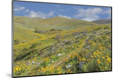 Spring Wildflowers-Don Paulson-Mounted Giclee Print