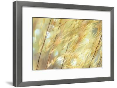 Golden Grasses-Don Paulson-Framed Giclee Print