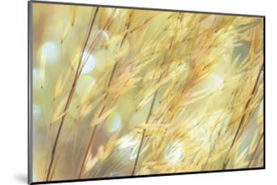Golden Grasses-Don Paulson-Mounted Giclee Print