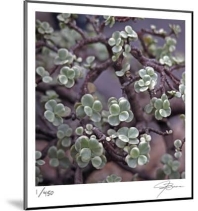 Succulent 13-Ken Bremer-Mounted Limited Edition