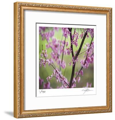Tree Blossoms-Ken Bremer-Framed Limited Edition