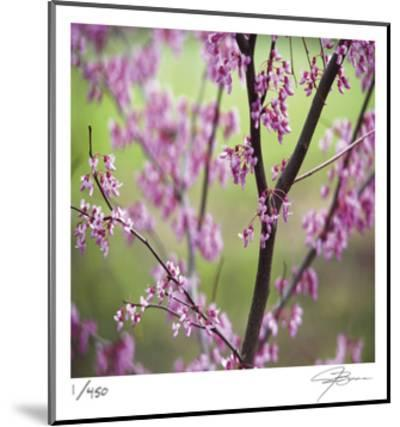 Tree Blossoms-Ken Bremer-Mounted Limited Edition