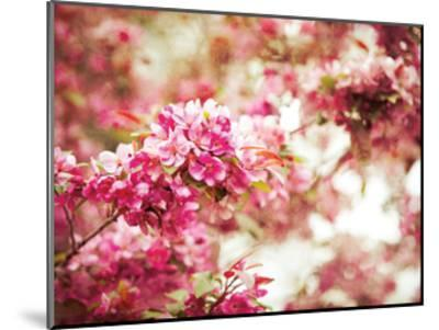 Spring Blooms-Sonja Quintero-Mounted Art Print
