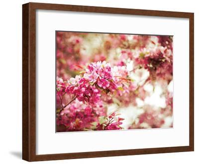 Spring Blooms-Sonja Quintero-Framed Art Print