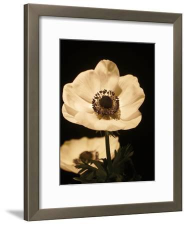 Floral Closeup 1-Kimberly Allen-Framed Art Print