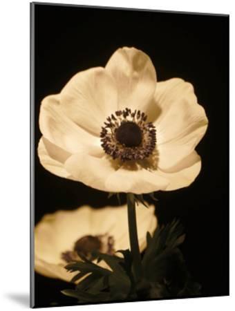 Floral Closeup 1-Kimberly Allen-Mounted Art Print