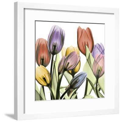 Tulipscape 2-Albert Koetsier-Framed Art Print