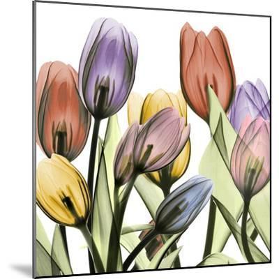 Tulipscape 2-Albert Koetsier-Mounted Art Print
