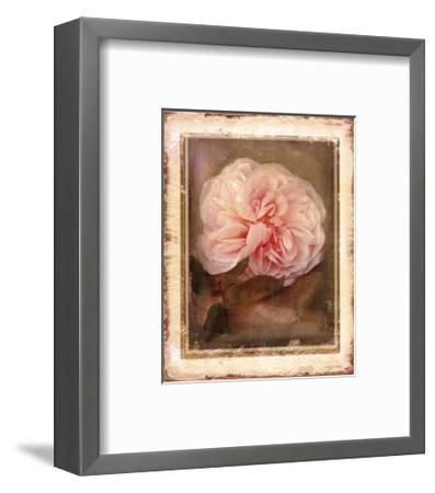 Cabbage Roses-Linda Maron-Framed Art Print