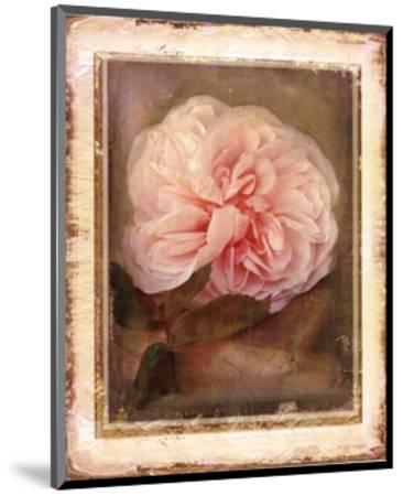 Cabbage Roses-Linda Maron-Mounted Art Print
