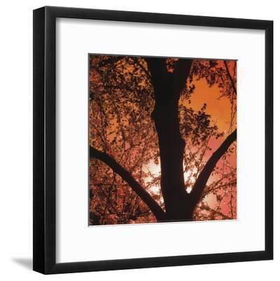 Sunset Forest I-M^J^ Lew-Framed Art Print
