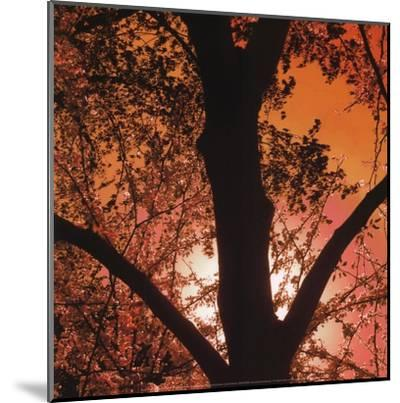 Sunset Forest I-M^J^ Lew-Mounted Art Print