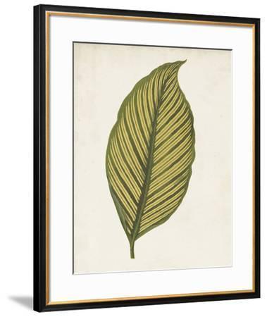 Graphic Leaf II-Vision Studio-Framed Giclee Print