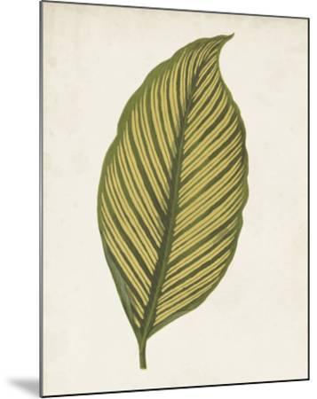 Graphic Leaf II-Vision Studio-Mounted Giclee Print