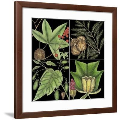 Graphic Botanical Grid III-Mark Catesby-Framed Giclee Print