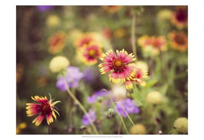 Wild Blooms III-Sonja Quintero-Framed Art Print