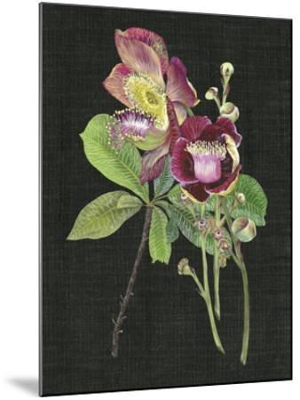 Couroupita Guianensis II-Melissa Wang-Mounted Giclee Print