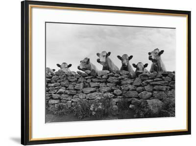 Over Herd-Enrico Straub-Framed Giclee Print
