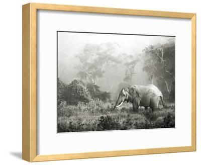 African elephant, Ngorongoro Crater, Tanzania-Frank Krahmer-Framed Art Print
