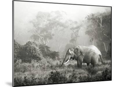 African elephant, Ngorongoro Crater, Tanzania-Frank Krahmer-Mounted Art Print