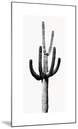 Saguaro Black & White III-Mia Jensen-Mounted Giclee Print