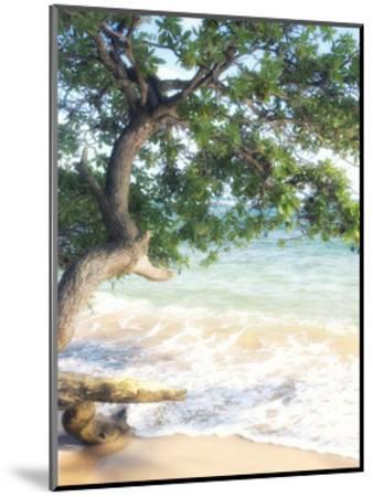 USA, Hawaii, Kauai-Savanah Plank-Mounted Giclee Print