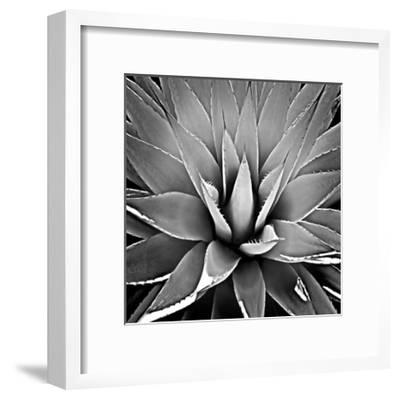 Succulent III-Mia Jensen-Framed Giclee Print